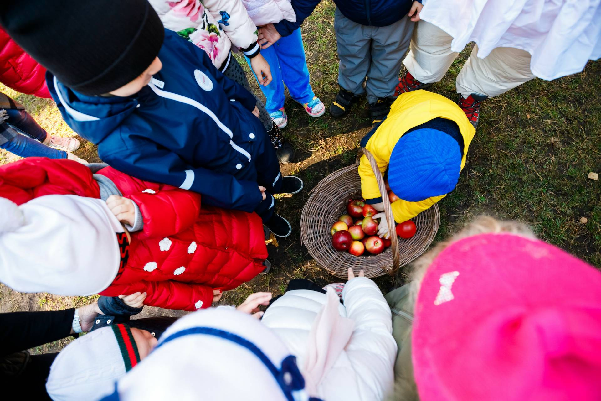 APPLE DAY AT RIS NURSERY ZHUKOVKA